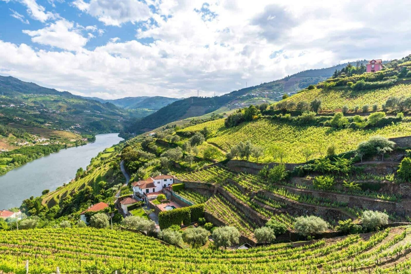 A river valley with green vineyards on both sides in Portugal